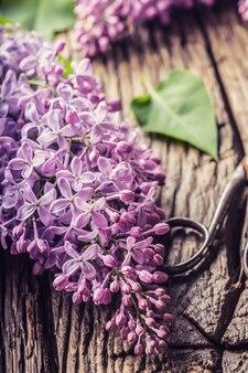Bouquet di lillà viola e forbici antiche sul vecchio tavolo di legno.