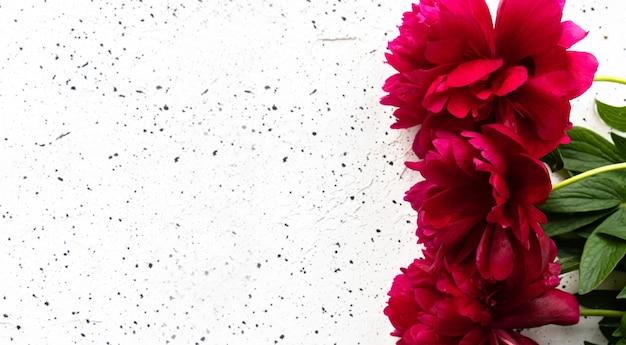 Bouquet di fiori di peonia rossa su un tavolo di cemento bianco. concetto di vacanza, 8 marzo, festa della mamma. vista dall'alto, luogo per il testo