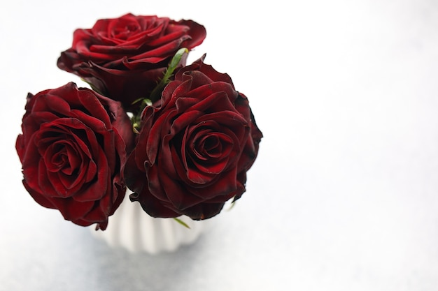 Bouquet di tre rose rosso scuro in vaso bianco su sfondo bianco