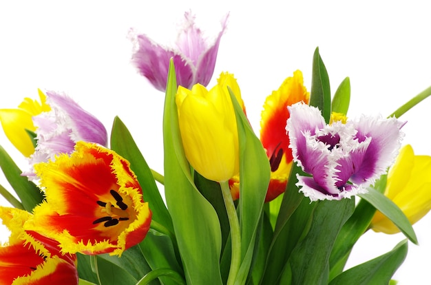 Mazzo dei tulipani su sfondo bianco