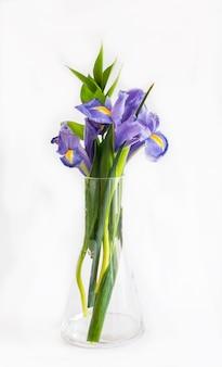 Bouquet di fiori di giglio viola su bianco