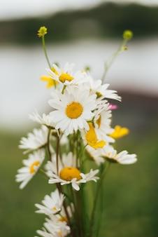 Bouquet di margherite bianche su uno sfondo di natura