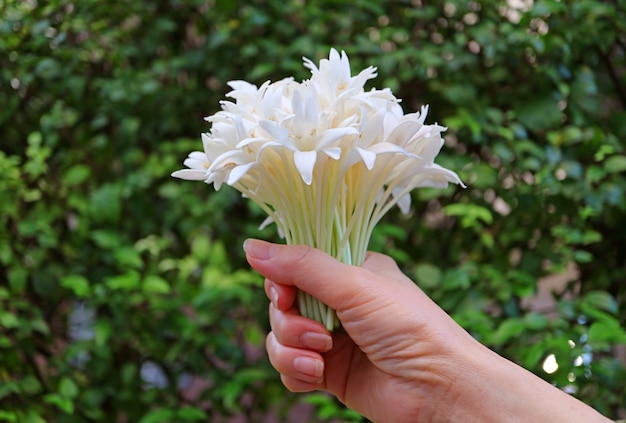 Bouquet di fiori bianchi millingtonia in mano contro fogliame verde sfocato