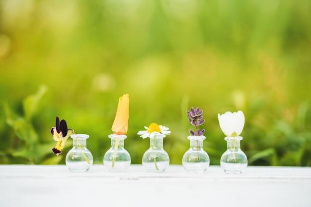 Bouquet di fiori di campo su legno.fiori estivi, batanica su sfondo bianco. viole del pensiero e camomilla, gelsomino, lavanda ed elicriso in boccette di vetro.
