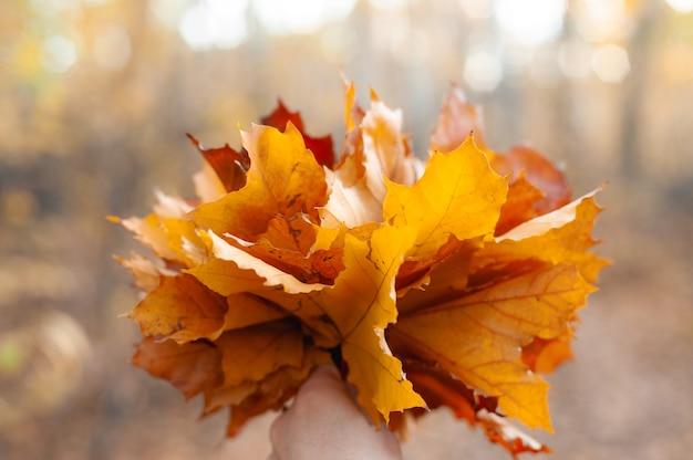 Bouquet di foglie di acero gialle, rosse e arancioni in mani umane nella foresta all'aperto.