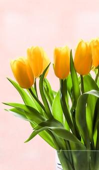 Mazzo di tulipani gialli illuminati dalla luce del sole su sfondo rosa