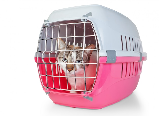 Scatola con gabbia per gatti per il trasporto. su un muro bianco