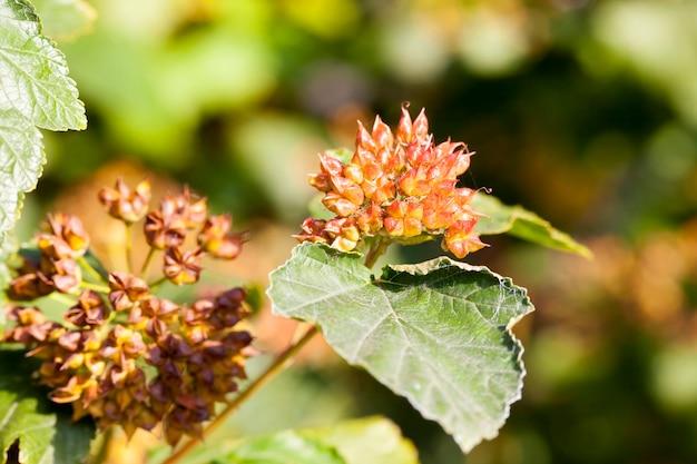 Scatola con semi su un cespuglio nella stagione autunnale