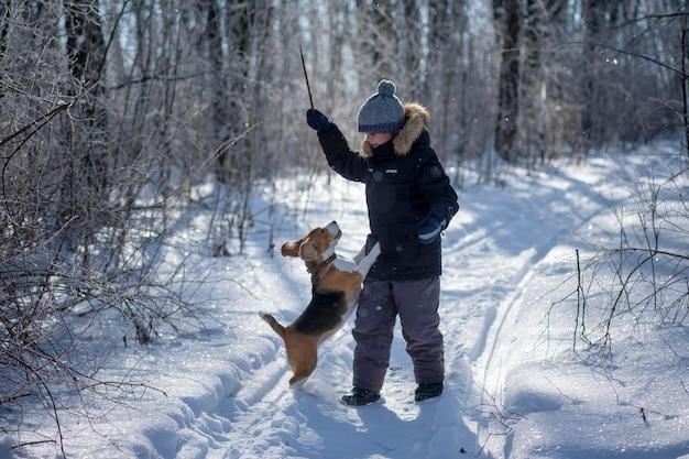 Ragazzo e cane beagle camminare e giocare nella foresta innevata di inverno in una gelida giornata di sole