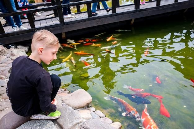 Il ragazzo è in piedi su un ponte di legno sul lago e dà da mangiare ai pesci koi giapponesi