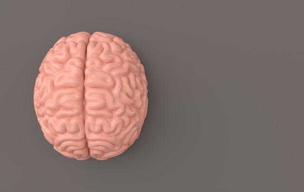 Modello di illustrazione del rendering del cervello il concetto di intelligenza brainstorming idea creativa mente umana