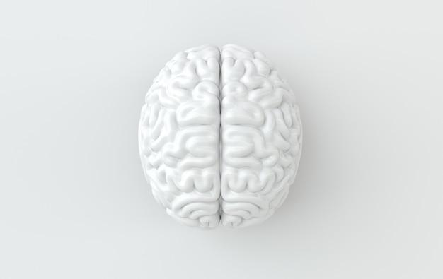 Illustrazione di rendering del cervello su sfondo bianco