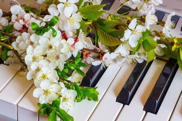 Ramo di fiori di albicocca e ciliegia sui tasti del pianoforte