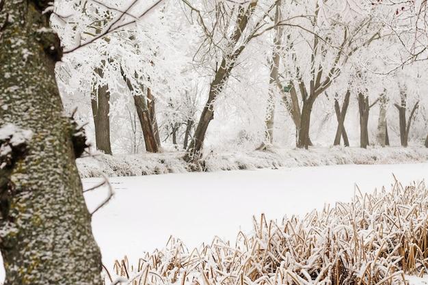 Ramo sul lago ghiacciato in inverno snow.with copia spazio.