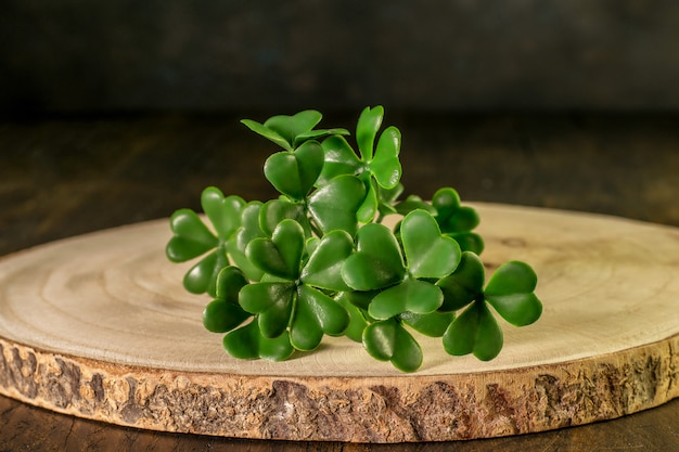 Filiale dell'acetosella verde sul legno