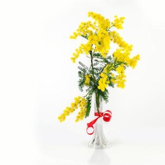 Ramo delle mimose nel vaso sui precedenti bianchi isolati