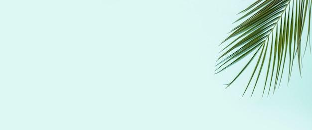 Ramo di una palma su sfondo azzurro.