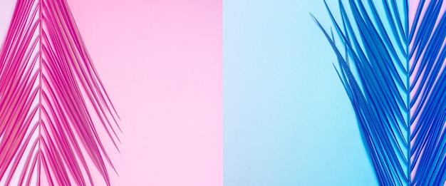 Ramo di una palma su uno sfondo azzurro e rosa.