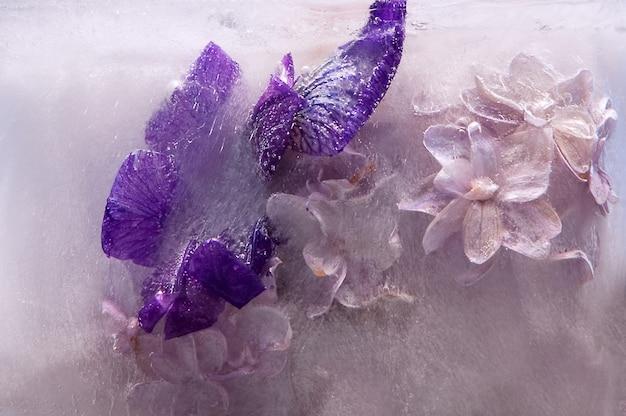 Ramo di fiori lilla viola nel cubo di ghiaccio con bolle d'aria.
