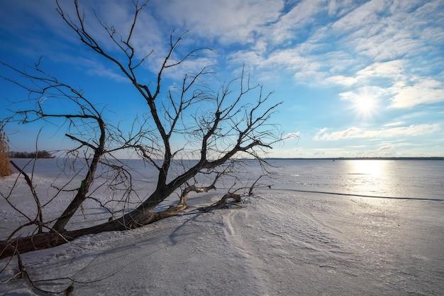 Ramifica un albero sulla riva di un lago ghiacciato