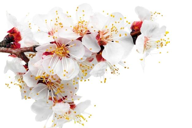 Ramo con fiori. isolato su sfondo bianco.