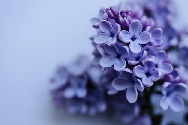 Ramo con fiori lilla primaverili sfondo natura primo piano spazio copia