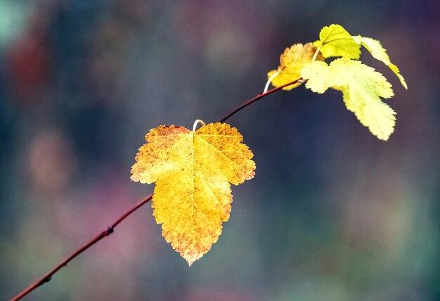 Ramo con foglie autunnali gialle nella foresta su sfondo scuro dark
