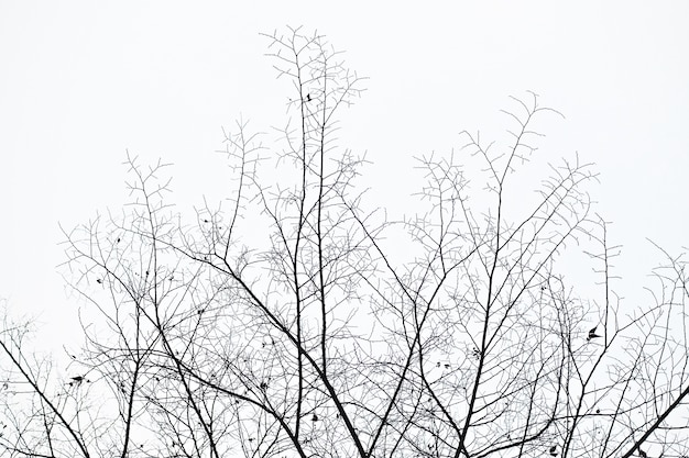 I rami di un grande albero sullo sfondo del cielo