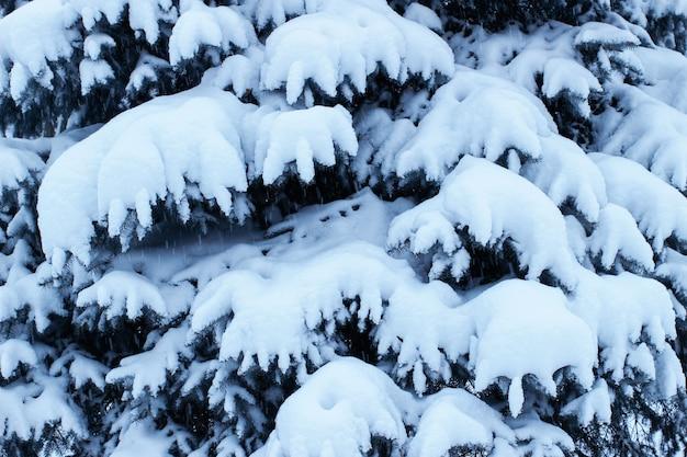 Rami di alberi di natale con neve da vicino