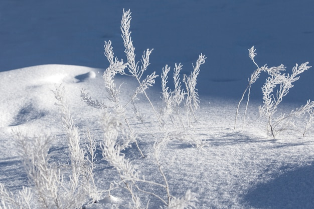 Rami coperti di brina in inverno