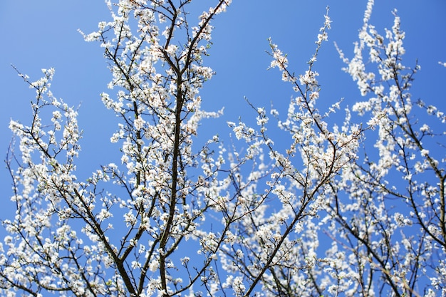 Rami di un albero contro il cielo. sfondo primavera