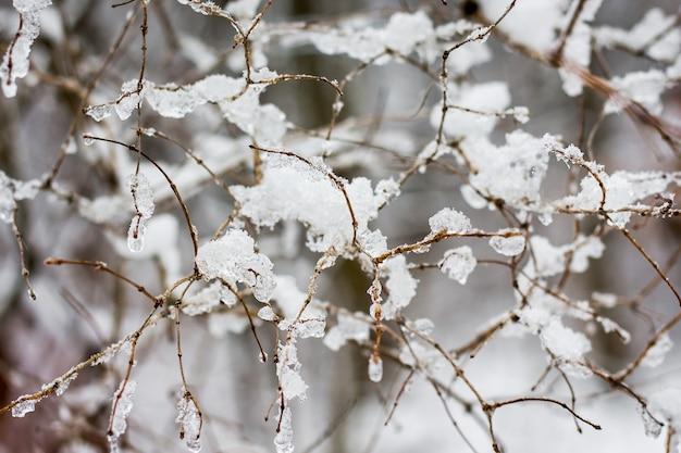 Rami di un albero intrecciati tra loro e ricoperti di neve e ghiaccio_