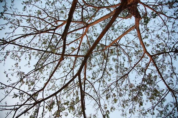 Filiali dell'albero.