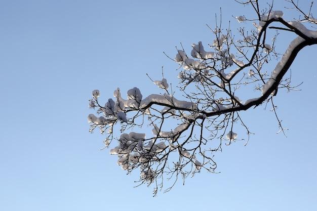 Rami di alberi coperti di neve in inverno sul cielo