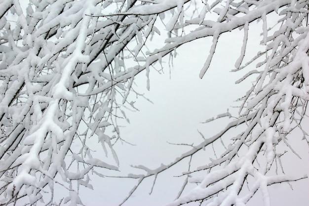 Rami di alberi coperti di neve in inverno