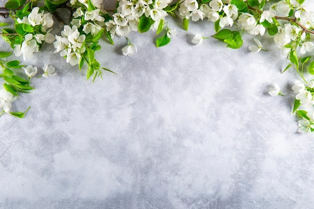 Rami di un melo in fiore bianco su uno sfondo grigio chiaro vista dall'alto