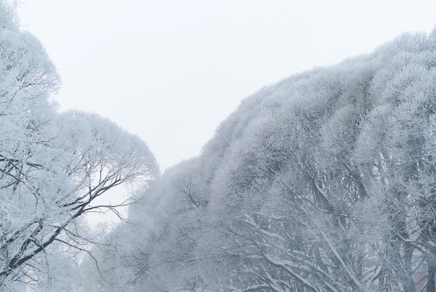Rami di salici ricoperti di brina contro un cielo nuvoloso con tempo gelido