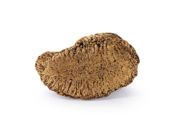 Castagna brasiliana naturale proveniente dalla foresta pluviale amazzonica, chiamata noce amazzonica o noce di pará