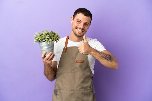 Uomo brasiliano del giardiniere che tiene una pianta sopra fondo porpora isolato che dà un gesto di pollice in su
