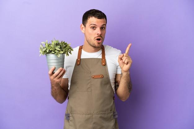 Un giardiniere brasiliano che tiene in mano una pianta su uno sfondo viola isolato con l'intenzione di realizzare la soluzione sollevando un dito