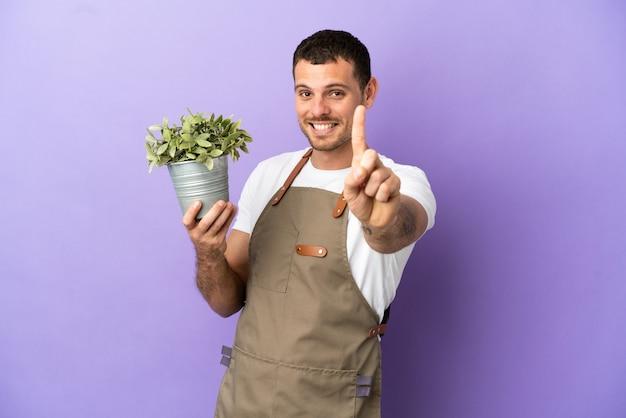 Uomo brasiliano del giardiniere che tiene una pianta sopra fondo porpora isolato che mostra e che solleva un dito