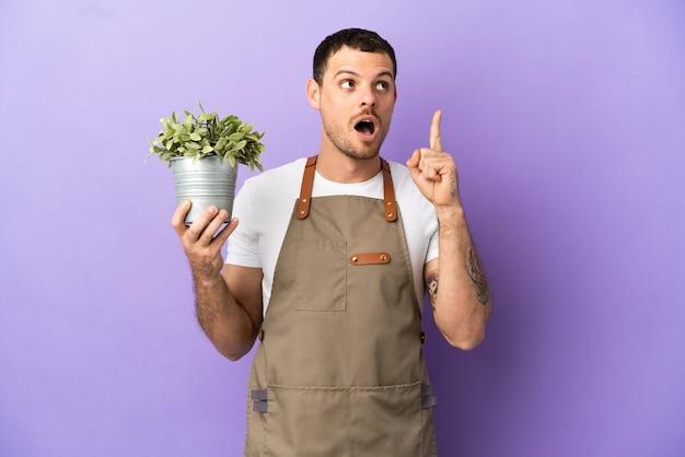 Giardiniere brasiliano uomo che tiene una pianta su sfondo viola isolato pensando a un'idea che punta il dito verso l'alto
