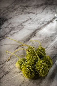 Cetriolino brasiliano, maxixe, illuminato su un marmo bianco.