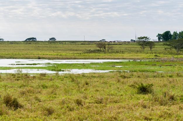 Immagine delle zone umide brasiliane