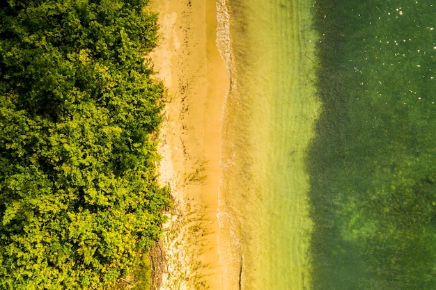 Scenario mozzafiato di una spiaggia tropicale con bellissime palme e vegetazione