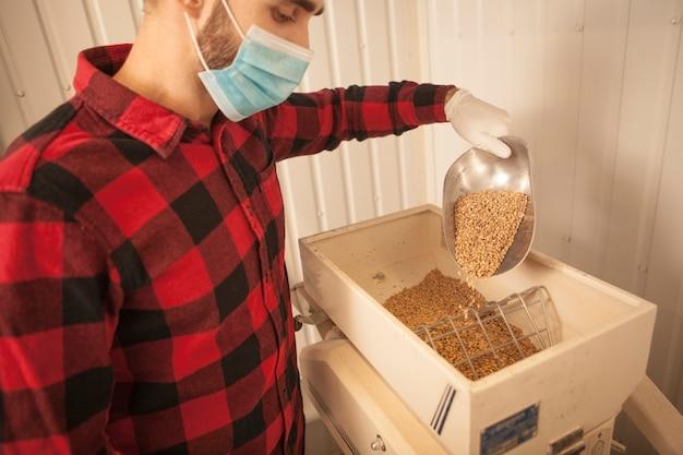 Birraio che indossa la maschera facciale medica che versa i semi dell'orzo nel mulino per cereali