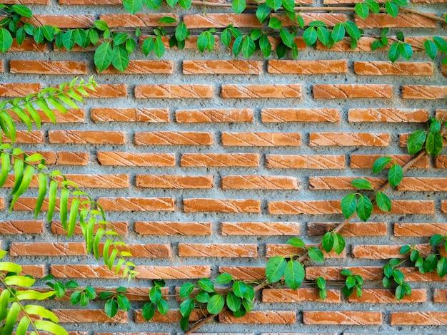 Muro di mattoni ed edera, sfondo. struttura del muro di mattoni rossi con piante rampicanti di edera verde e coperture di foglie.