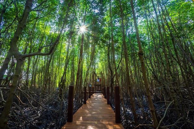 Modo di camminata di legno del ponte nella mangrovia della foresta in chanthaburi tailandia.