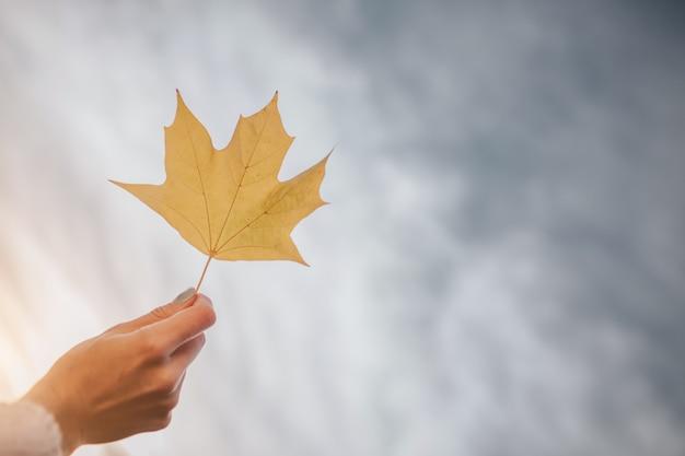 Bright autumn leaf sul cielo.