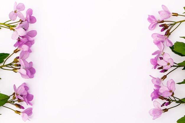Fiori di campo rosa delicati luminosi su uno sfondo chiaro. cartolina con spazio per il design.
